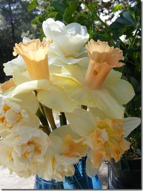 tulip festa 022