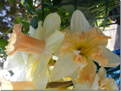 tulip festa 023