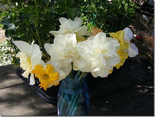 tulip festa 029
