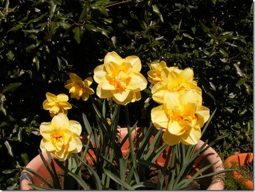 tulip festa 108
