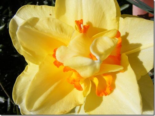 tulip festa 109
