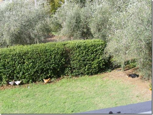 polenta 2012 065
