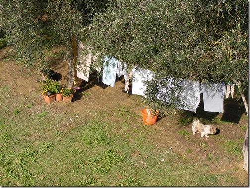 rabbit in november 2012 013