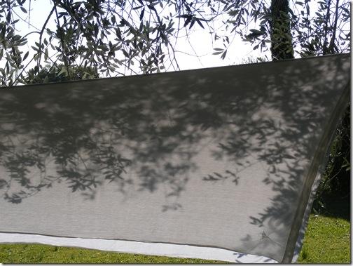 okra, fall2012 027