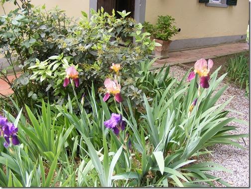 Dinah's garden 001