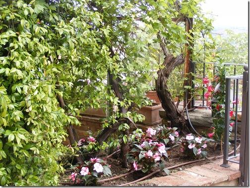 Dinah's garden 006