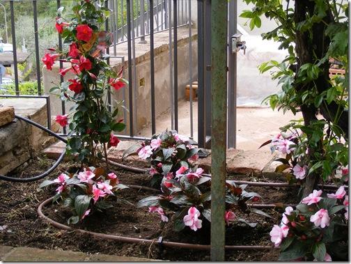 Dinah's garden 012