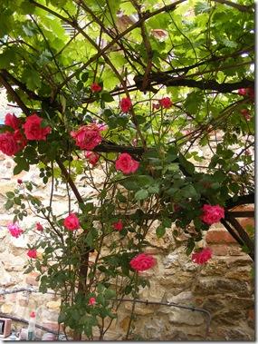 Dinah's garden 014