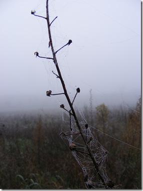 foggy jan 2014 002