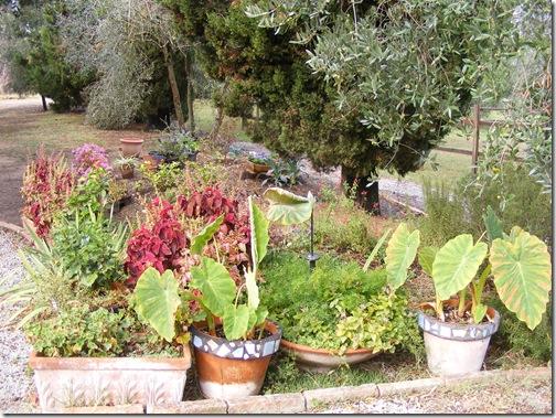 garden, sept, 2013 001