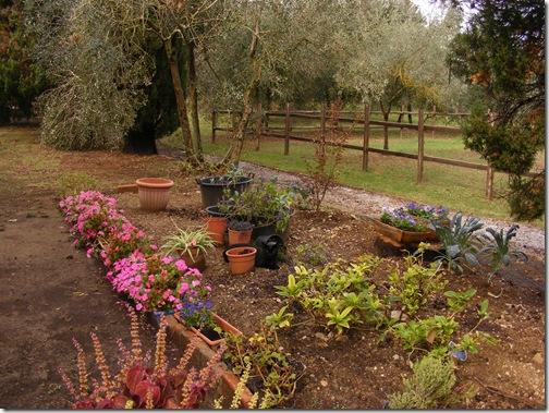 garden, sept, 2013 003