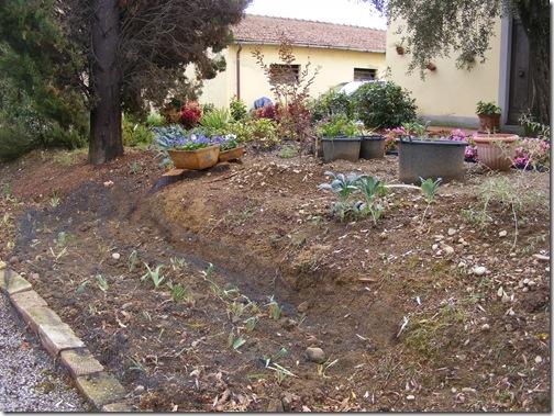 garden, sept, 2013 005
