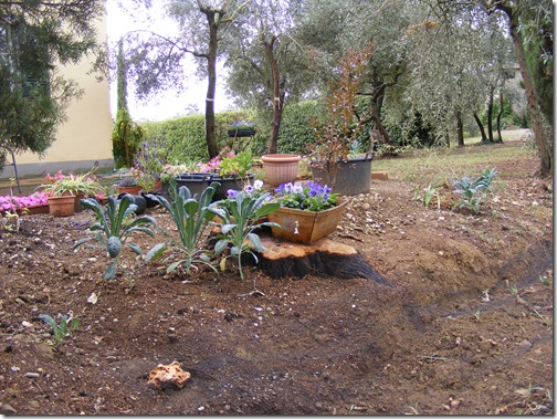 garden, sept, 2013 006