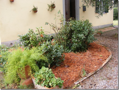 garden, sept, 2013 007