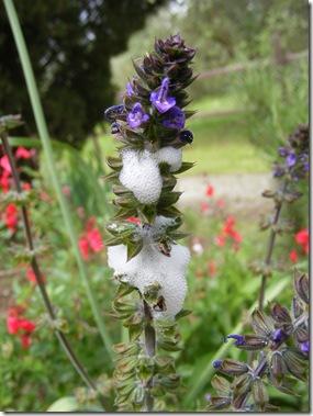 garden, guazzino may 14 105