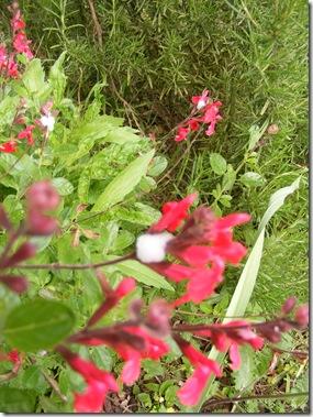 garden, guazzino may 14 107