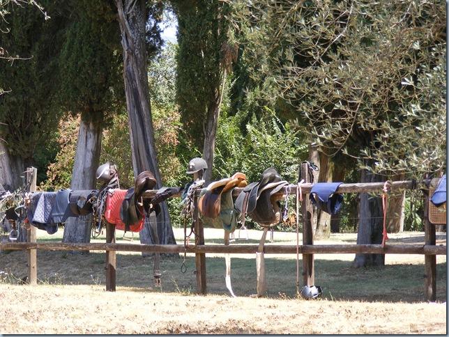 horse round up, august 2015 002