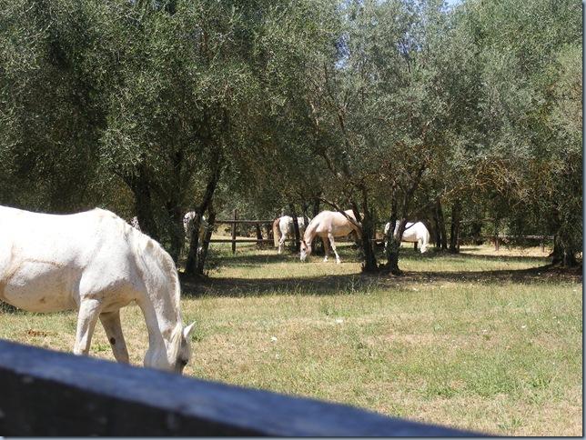 horse round up, august 2015 004