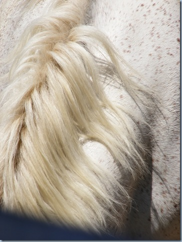 horse round up, august 2015 005