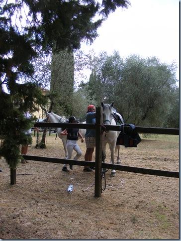 horse round up, august 2015 008