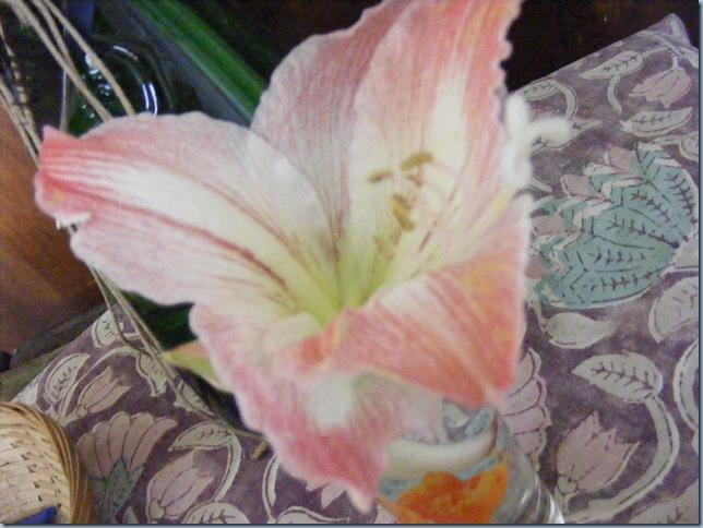 april 2016, john's tulips 013