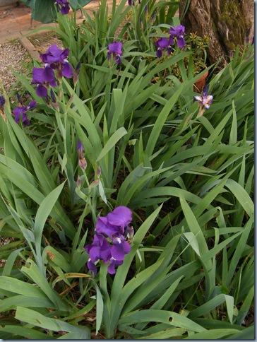 festa della roche, orchids april 2016 004
