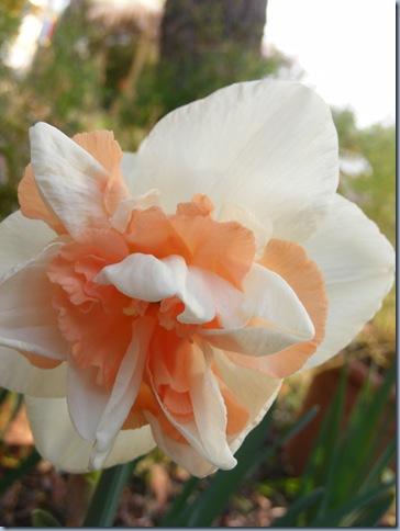 festa della roche, orchids april 2016 006
